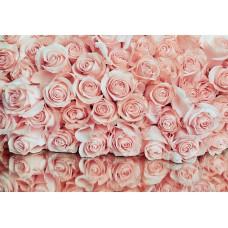 Фотообои PosterMarket WM-48NW Розовые розы